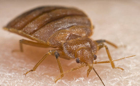 Bed Bug Removal Ri Professional Bed Bug Exterminators